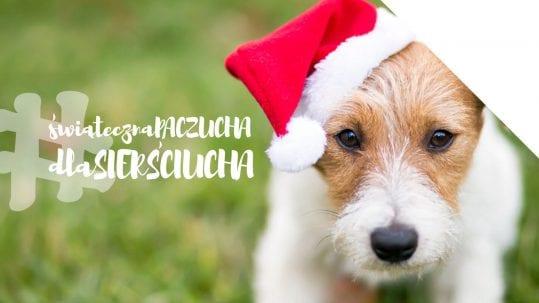 Podsumowanie akcji charytatywnej dla zwierząt w IT.integro